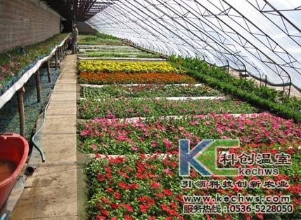 山东花卉温室大棚