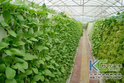 无土栽培,无土栽培技术,气雾栽培