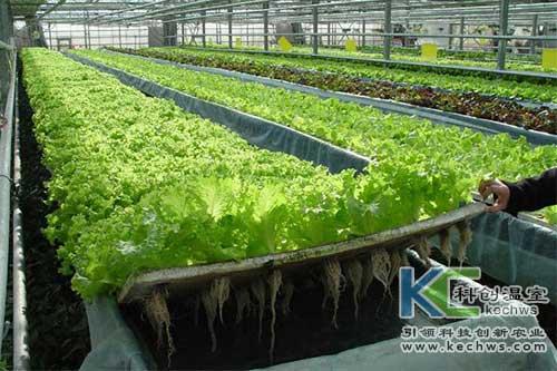 无土栽培,无土栽培技术,深液流
