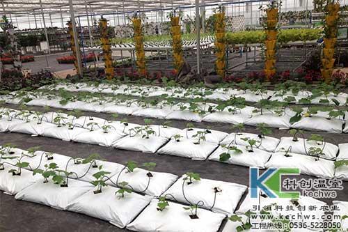 袋式无土栽培,无土栽培,基质栽培