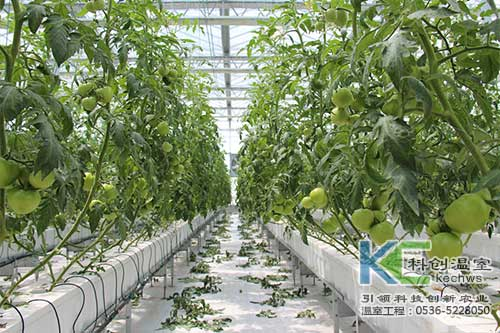 无土栽培,无土栽培技术,基质栽培
