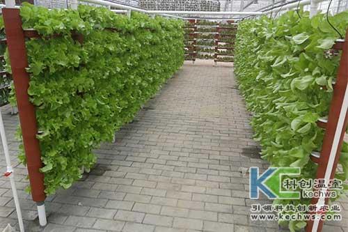 无土栽培技术,基质栽培,水培