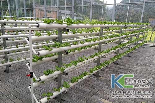 无土栽培,鱼菜共生,立体栽培