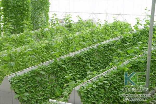 无土栽培,无土栽培技术,无土栽培营养液