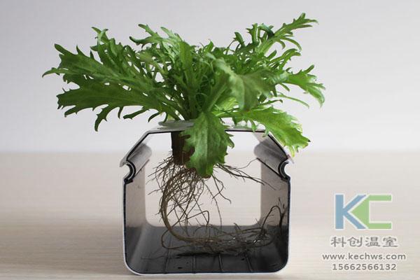 智能温室无土栽培,无土栽培技术,温室大棚,无土栽培