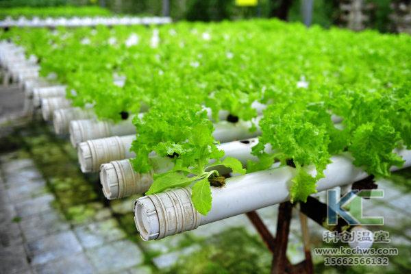 有机生态型无土栽培,无土栽培技术,无土栽培设备,无土栽培