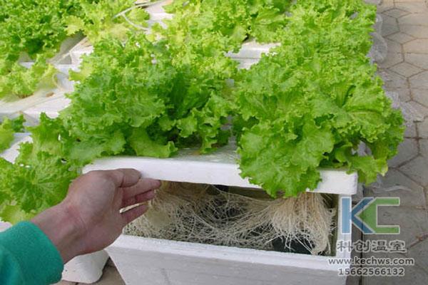 现代农业生态,。无土栽培技术,无土栽培,温室大棚