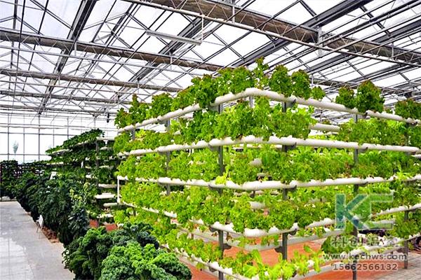 无土栽培,无土栽培技术,蔬菜栽培