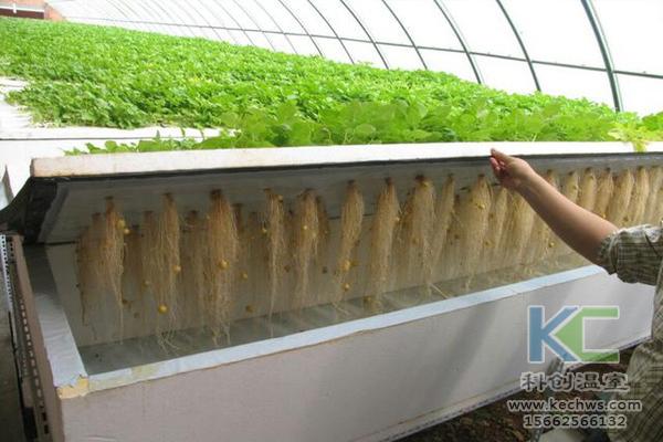 无土栽培,无土栽培技术,无土栽培设备,温室大棚