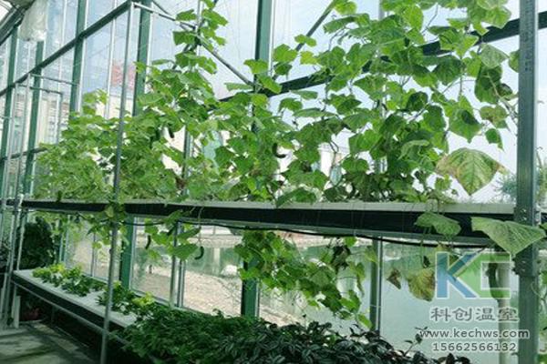 无土栽培蔬菜,无土栽培技术,无土栽培设备,温室大棚