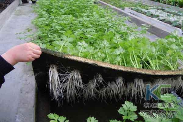 无土栽培技术,无土栽培,温室大棚,蔬菜大棚
