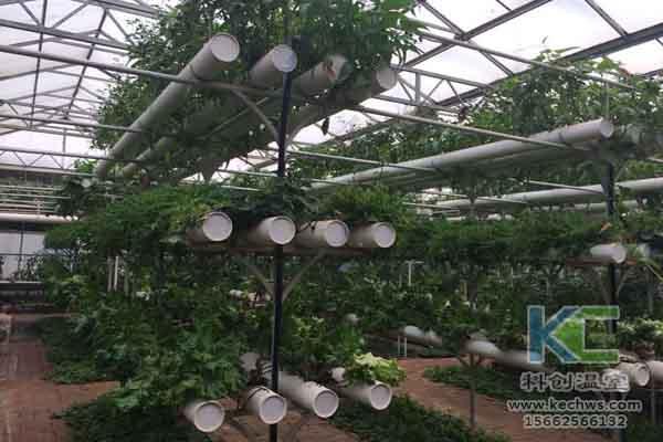 无土栽培技术,无土栽培设备,温室大棚,蔬菜大棚