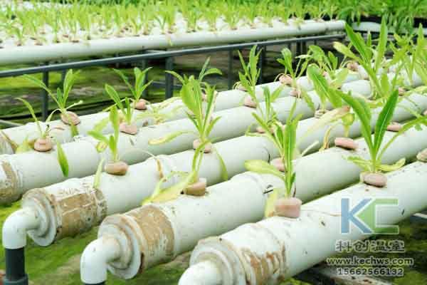无土栽培技术,蔬菜大棚建设,温室大棚,无土栽培