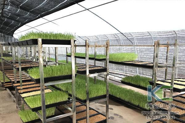 无土栽培技术,无土栽培设备,基质栽培,温室大棚