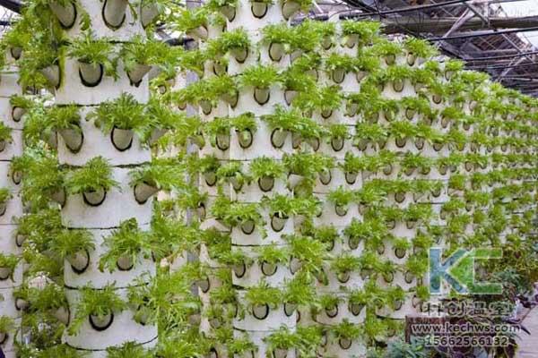 无土栽培,无土栽培技术,无土栽培设备,蔬菜栽培