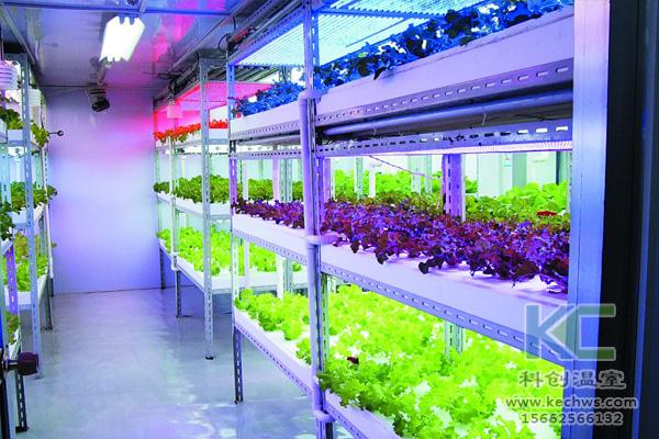 蔬菜无土栽培,无土栽培技术,无土栽培设备,无土栽培
