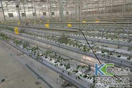 椰糠栽培,有基质栽培,无土栽培