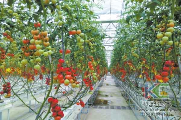 无土栽培技术,温室大棚造价,蔬菜大棚,无土栽培