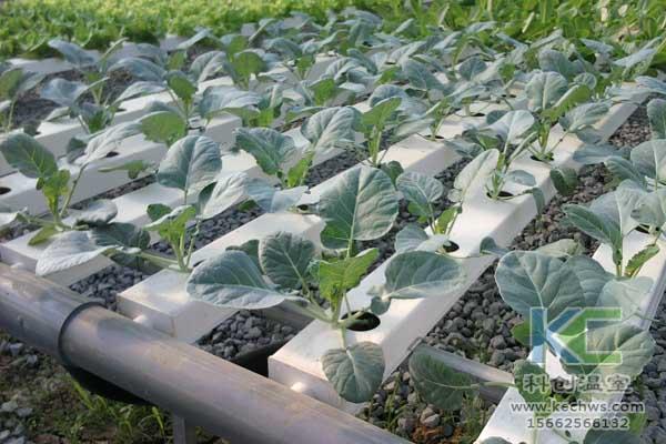 无土栽培技术,无土栽培设备,鱼菜共生,温室大棚