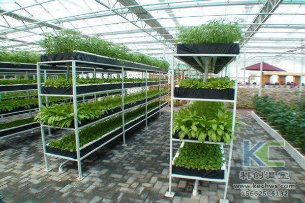 无土栽培技术,基质栽培,水培,温室大棚