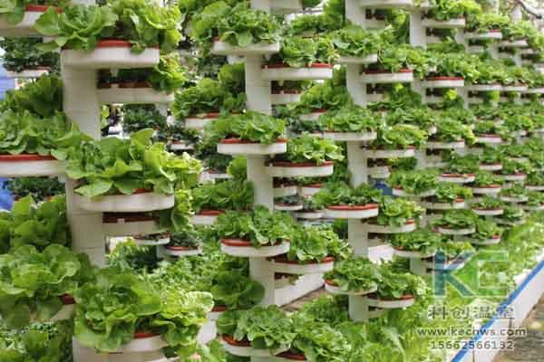无土栽培技术,无土栽培,温室大棚,基质栽培