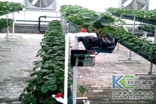 无土栽培设备,无土栽培,无土栽培技术