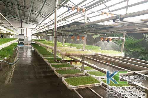 芽苗菜,无土栽培,植物工厂