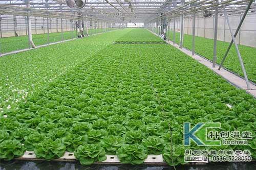 无土栽培,无土栽培技术,成本