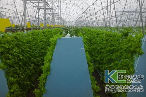 无土栽培,无土栽培技术,气雾培