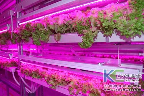 无土栽培,垂直栽培,无土栽培技术