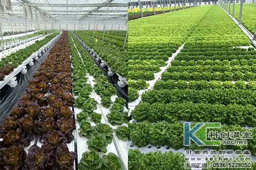山西,植物工厂,无土栽培
