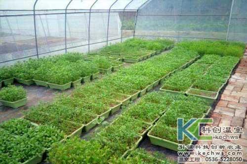 基质栽培,无土栽培,有机基质栽培