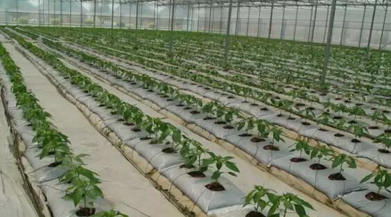 大棚蔬菜,基质栽培,无土栽培