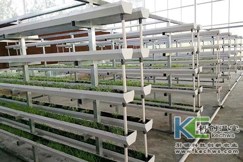 无土栽培,基质栽培,水培
