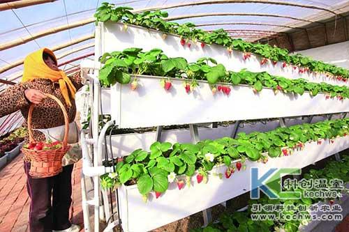 无土栽培,无土栽培技术,立体栽培