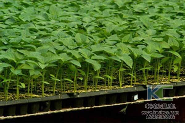 无土栽培,无土栽培技术