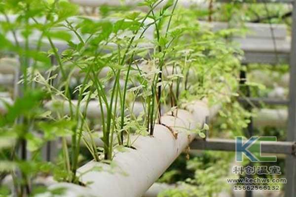 无土栽培,无土栽培肥料