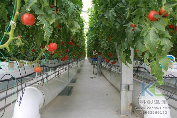 基质栽培,无土栽培技术,无土栽培设备,温室大棚