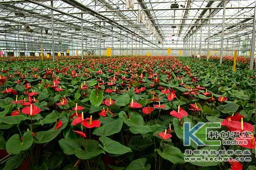 花卉,无土栽培,无土栽培技术