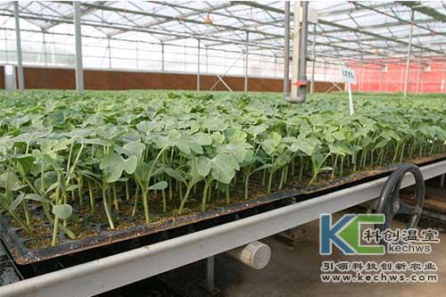 无土栽培,无土栽培技术,育苗