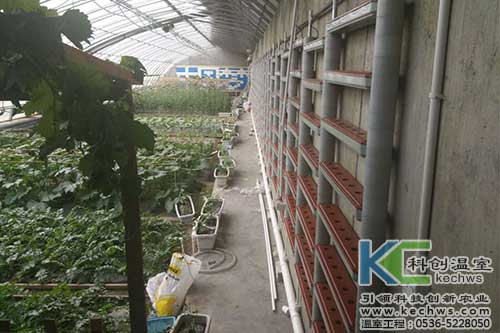 西藏,无土栽培.无土栽培技术