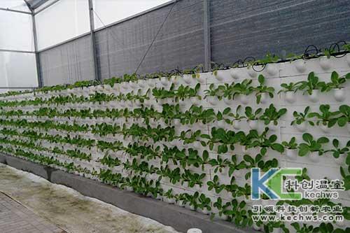 无土栽培,立体栽培,墙体栽培