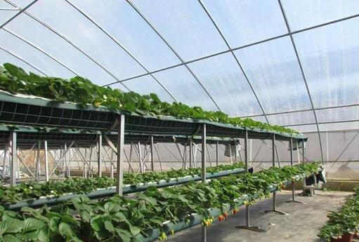 基质栽培,基质栽培造价,无土栽培
