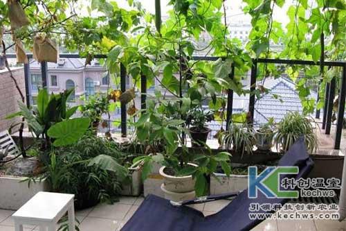 无土栽培,无土栽培技术,阳台无土栽培