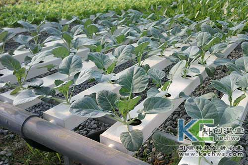 无土栽培,无土栽培技术,营养液膜无土栽培