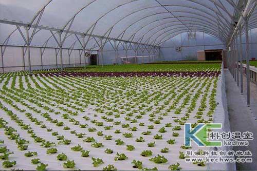无土栽培,水培,蔬菜