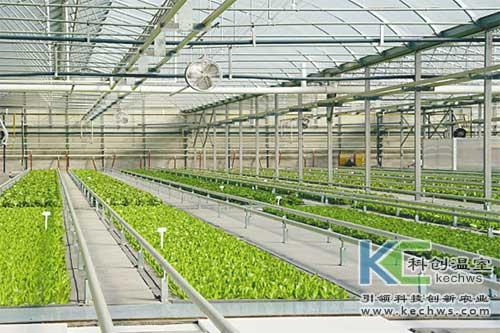 无土栽培,蔬菜,病害