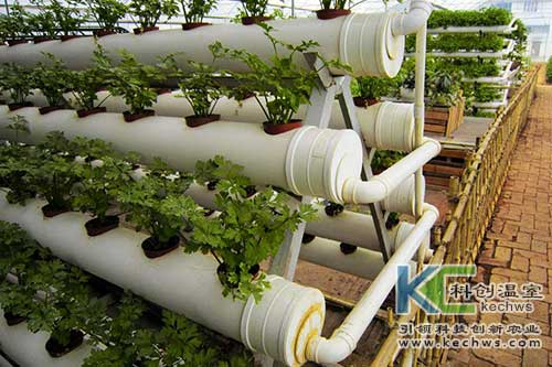 无土栽培,无土栽培技术,发展