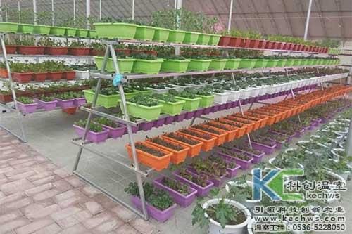 椰糠栽培,基质栽培,无土栽培