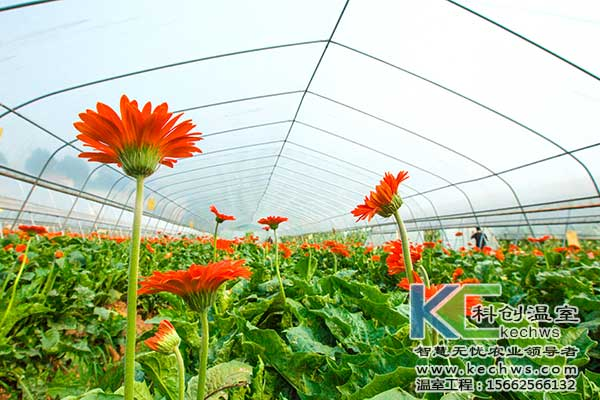 无土栽培,无土栽培花卉,无土栽培技术